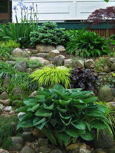 Rock garden & shade plants, hostas, japanese forest grass, heucheras