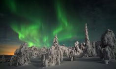Northern lights tours in Lapland. Experience Aurora Borealis in the arctic wilderness, stay at the ICEHOTEL, drive your own dog sled team. Book your tailor-made holiday and winter travel packages to Lapland. Glass Igloo Northern Lights, Northern Lights Finland, Northern Lights Viewing, Northern Lights Trips, See The Northern Lights, Lofoten, Aurora Borealis, Glass Igloo Hotel, Igloo Village