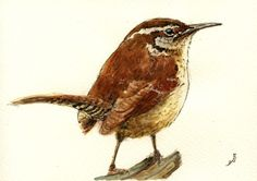 Wren Garden Bird Sing Cute Original ART Watercolor Animal Painting BY Juan Bosco | eBay