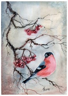bullfinch on the branch by kosharik69 on deviantART