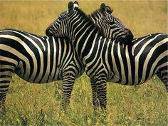 animals love - Buscar con Google