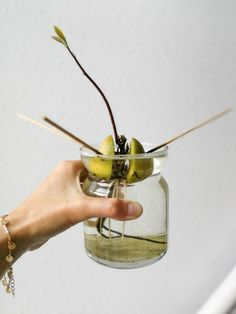 Avokadon kasvatus – näin kasvatat avokadopuun - Kotiliesi.fi Incense, Colours, Diy, Food, Decorating, Kitchen, Ideas, Decor, Decoration