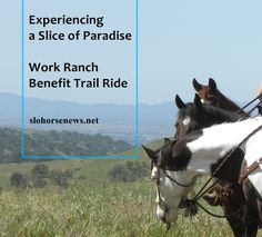 Emerald green hills dotted with dark green oak trees highlighted with purple lupine and accented with blue skies and white clouds were the visual highlights of my day. No I wasn't dreaming; I was experiencing a slice of paradise riding on the Work Ranch Benefit Trail Ride. http://www.slohorsenews.net/experiencing-paradise-work-ranch-benefit-trail-ride/
