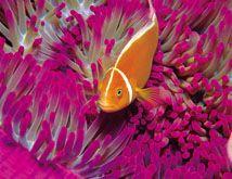 Marine Life near Hayman Island Resort Life Under The Sea, Body Adornment, Island Resort, Woodland Party, Great Barrier Reef, Royal Caribbean, Ocean Life, Unique Colors, Marine Life