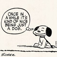 1000  images about For the Love of Snoopy. on Pinterest