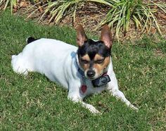 Kelby Dog Breed