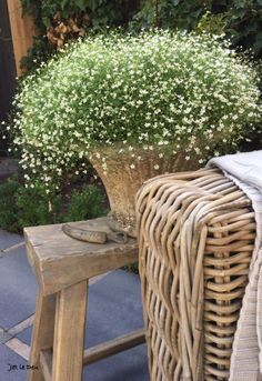 Ana Rosa - via: Jet Le Deu Love the baby's breath flowers Container Plants, Container Gardening, Beautiful Gardens, Beautiful Flowers, White Flowers, Dream Garden, Home And Garden, Gardening For Beginners, Garden Inspiration