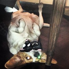 Possessed Penelope ♥ cani pazzi