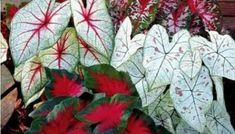 Plant Leaves, Plants, Ferns Garden, Crop Rotation, Ornamental Plants, Gardening, Fonts, Gardens, Princesses