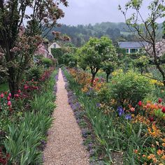 Monet's Gardens at Giverny is another seasonal beauty. This garden includes a Japanese bridge and water lilies, all inspired by history's great painter and founder, Claude Monet. A beautiful shot from @bwiggy. #myvikingstory