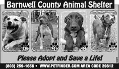 Barnwell County Animal Shelter ad  4/17/13