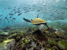 Snorkel in the Galapagos  islands