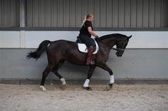 Paarden te koop: GOLINDA