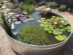Stock Tank Pond Update Metal Tank Garden Pond (Excellent how-to via the link. Don't forget to make the pond safe re children and other small creatures AND to prevent mosquitoes. Container Pond, Container Water Gardens, Ponds For Small Gardens, Small Ponds, Small Garden Fish Ponds, Fish Pond Gardens, Patio Pond, Ponds Backyard, Outdoor Fish Ponds