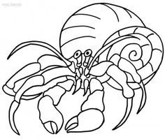 printable hermit crab coloring pages