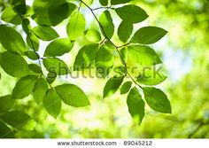 Tree branch over blurred green leaves background - stock photo