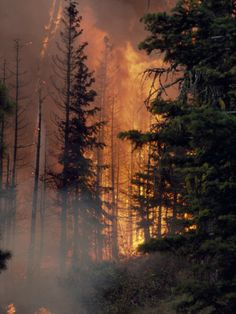 Forest Fire.  Imagine trying to hunt for a creature while having to battle nature as well.