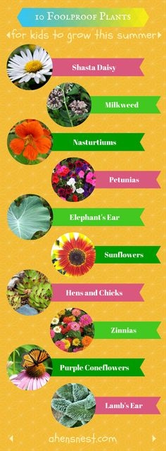 10 foolproof plants for #kids to grow this summer #gardening #flowers