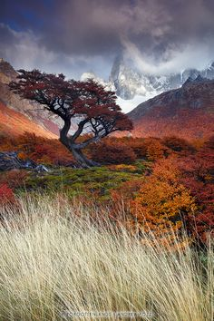 Creature of autumn by AndreaPozzi. Please Like http://fb.me/go4photos and Follow @go4fotos Thank You. :-)