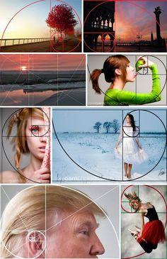 Esperimenti didattici: la spirale aurea tra geometria, conchiglie, proporzioni rinascimentali e un curioso esperimento di fotografia.