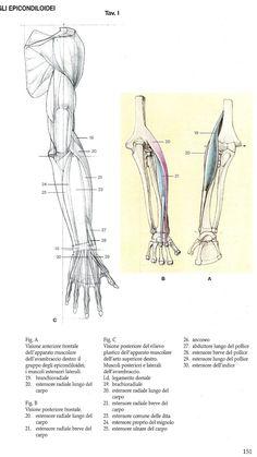 * Hands & Arm * 1