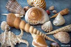 Risultati immagini per conchiglie marine