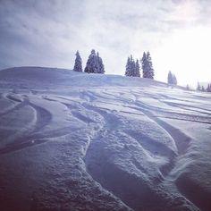 Salzburg, Snowboarding, Skiing, Snow Fun, Mountain S, Safari, Tourism, Sunshine, Powder