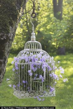 Phlox in a bird cage