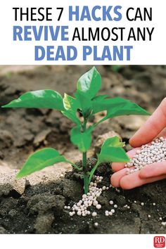Appearances can be deceiving, so even if a plant looks dead, it doesn& mean that it is. Try these expert gardening tricks to revive dead plants before tossing your latest victim in the compost pile. Benefits Of Gardening, Organic Gardening Tips, Gardening Hacks, Container Gardening, Organic Compost, Grow Organic, Organic Plants, Hydroponic Gardening, Gardening Supplies