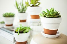 Painted Pots + Succulents - offbeat + inspired