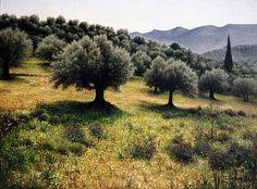 Olive Grove by athos~*, via Flickr