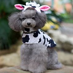 Lovely Cow Shaped Costume with Hat Tail for Pets Dogs (Assorted Sizes) – USD $ 23.39 The cutest thing ever....