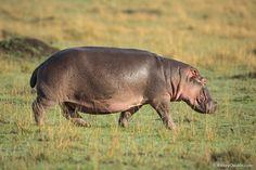 giants-of-africa-07