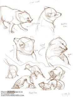 Daily_Animal_Sketch_071c