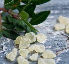 Mastiha Mastic Tears 100% Top Quality Natural  Of Chios Island 1.35 oz – 40ml  #Masticha
