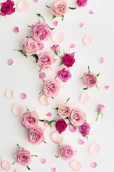 Rose Background On White Down load this high-resolution stock photo by Ruth Black from Stocksy United. Floral Wallpaper Phone, Wallpaper Iphone Cute, Cellphone Wallpaper, Colorful Wallpaper, Galaxy Wallpaper, Flower Wallpaper, Iphone Wallpapers, Rose Background, Flower Background Wallpaper