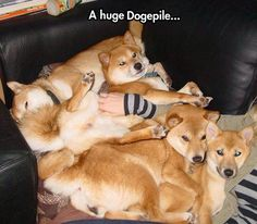 Such Doges, Many Fur