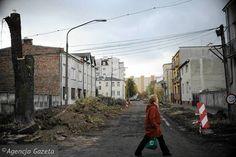 Dane zebrali ekolodzy: w ostatnich sześciu latach w Warszawie wycięto prawie 150 tysięcy drzew. Skąd ta hekatomba? I ile drzew zostało posadzonych na miejsce wyciętych?