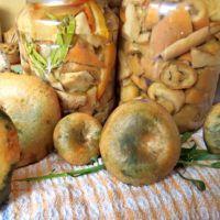 nakládání a jiné zpracování hub | ReceptyOnLine.cz - kuchařka, recepty a inspirace
