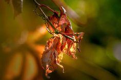 dry leaves - null