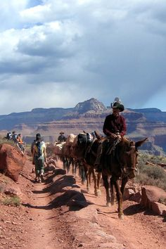 grand canyon mule images 2005 | Down and Out: Hiking the Grand Canyon with Children