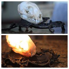 Forest Floor Skull Nightlight   Skeletons, Leaves and Taxidermy