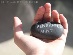 Google Image Result for http://lifeonthebalcony.com/wp-content/uploads/2009/12/Stone-Plant-Markers.jpg