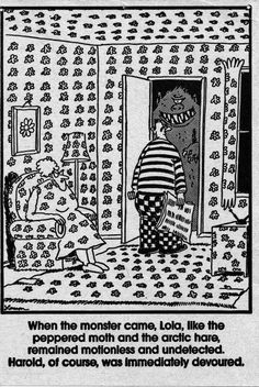"""Peppered moth, arctic hare, camoflauge is important! -- """"The Far Side"""" by Gary Larson. Far Side Cartoons, Far Side Comics, Funny Cartoons, Funny Jokes, Hilarious, Jokes Pics, Peppered Moth, Starwars, Gary Larson Far Side"""