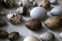 """Egg Love"" - © et lille oejeblik (Flickr)"