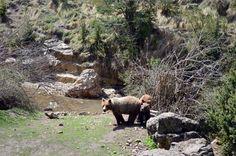 Silvia y oseznos cerca del río Escabas