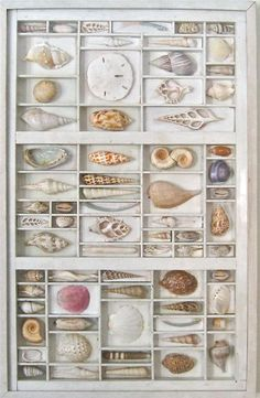 A mixed media art for the wall, a 3D collage or assemblage that features seashells from around the world. Unlike other shadow box art, each shell is a
