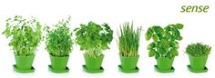 Súprava Sense pre pestovanie čerstvých byliniek v domácnosti. Obsahuje semená tymiánu, žeruchy, bazalky, pamajoránu, petržlenu a pažítky, ďalej pôdne substráty v bio kvalite a 6 kvetináčov z odolného plastu. Parsley, Celery, Herbs, Vegetables, Kitchen Stuff, Mall, Food, Essen, Herb