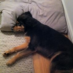 Dog bed = dog pillow