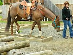 1000+ images about Horse Agility n Trail obstacles on ...